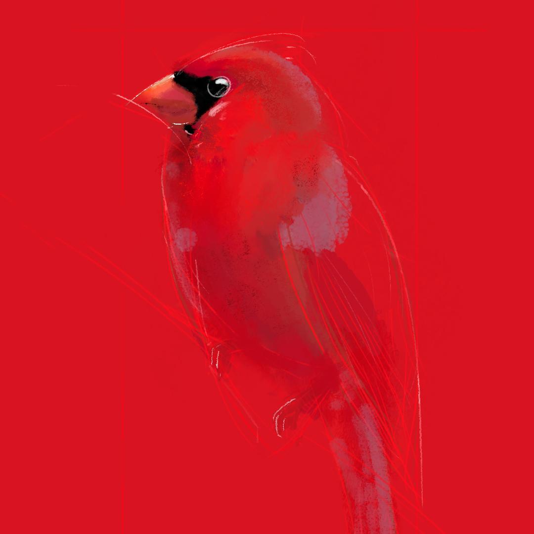 CARDINAL_BIRD_5