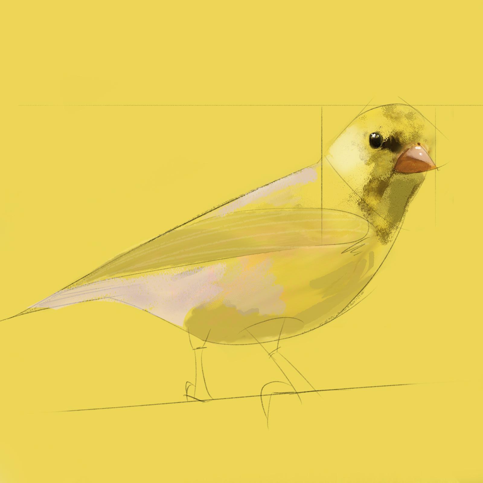 YELLOW_BIRD_6